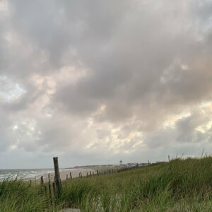 September LBI Lifeguards + Dogs on The Beach: A 2020 Update